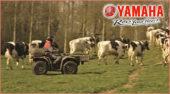 Yamaha Kodiak in der Landwirtschaft: ist ein verlässlicher Partner, der die Arbeit erleichtert