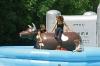 Bull Riding: trainiert den Rodeo-Nachwuchs