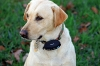 Garmin GTU 10: bewacht auch den (entlaufenen) Hund